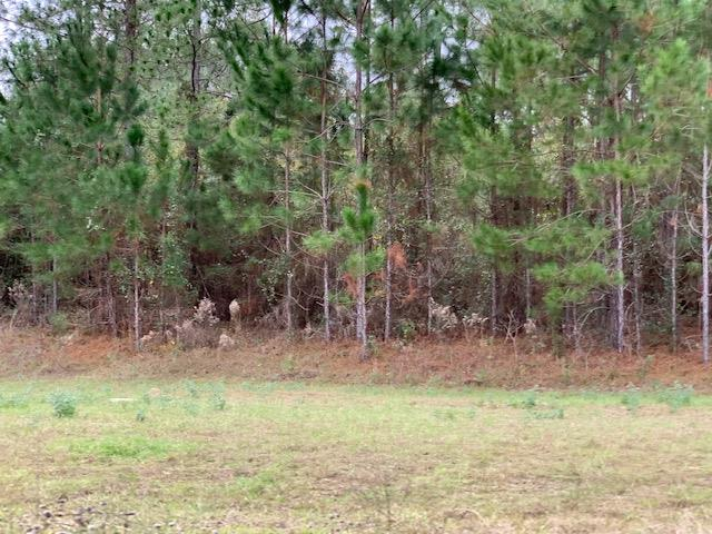 4611 Torree Pines Lane [Lot 42], Lake Park GA