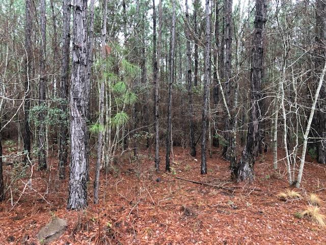 0 Old Timey Trail, Moultrie GA